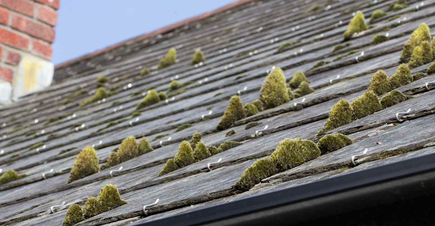 How To Remove Roof Moss Keay Roofing Services