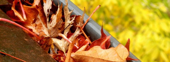 guttering clogged with leaves