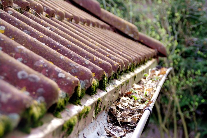 roof, maintenance, gutter, blocked